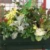 jardinière fleuries