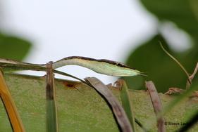 Costa Rica, les mammifères