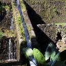 Le système d'irrigation (détail) - Photo : Yvon (Février 2015)
