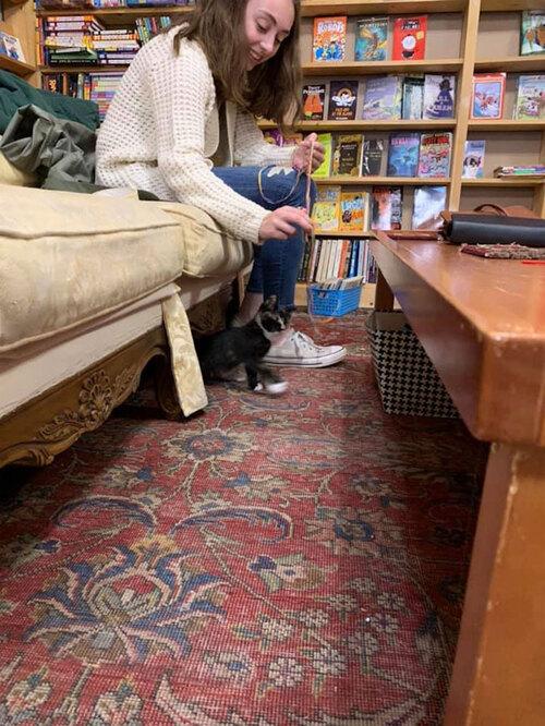 Adopter un chaton en librairie