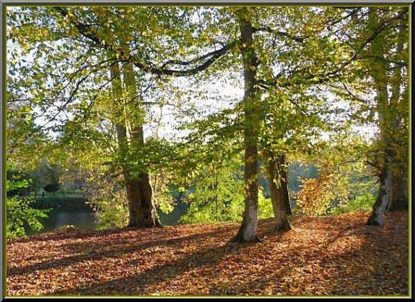 sous les arbres feuilles mortes