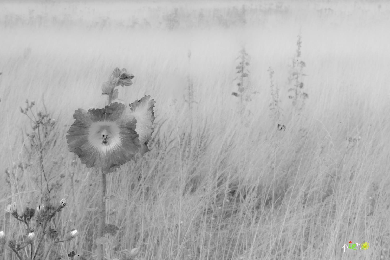 Une petite fleur.