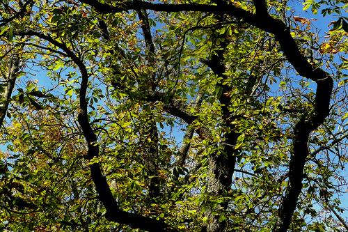 Branches d'arbres en automne