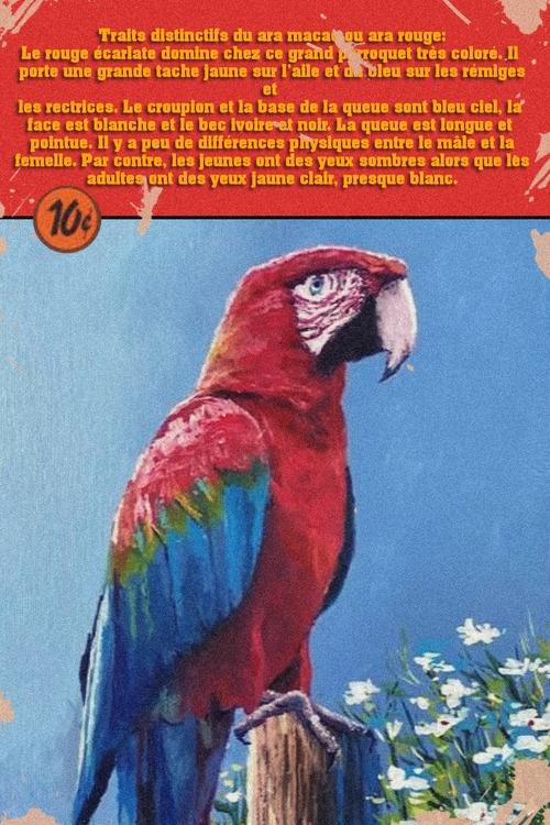 Dessin et peinture - vidéo 3555 : Comment peindre un ara macao ? - huile ou acrylique