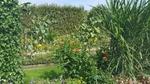 Le jardin des plantes.... encore....