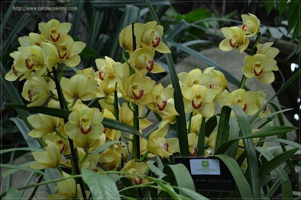 Orchidées Jardin des Plantes 7