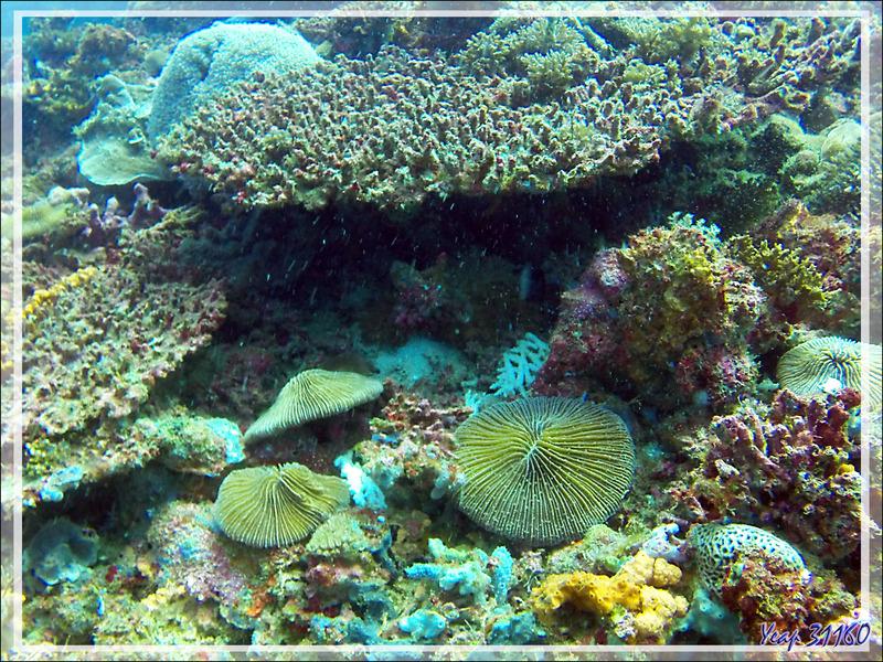 Poissons, éponges, coraux, anémones, gorgones, etc. - Nosy Tsarabanjina - Archipel des Mitsio - Madagascar