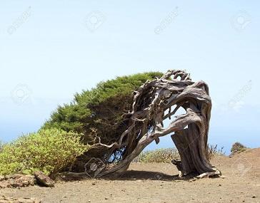 Du vent dans les branches de génévrier ...