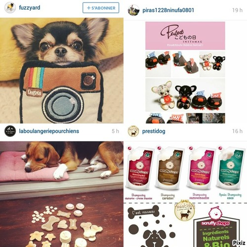 "Favoris | Instagram Mai 2015 "" Animaux & Shopping """
