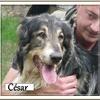 César 7