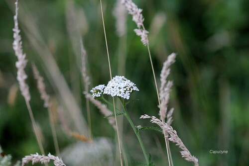 Les herbes folles au jardin