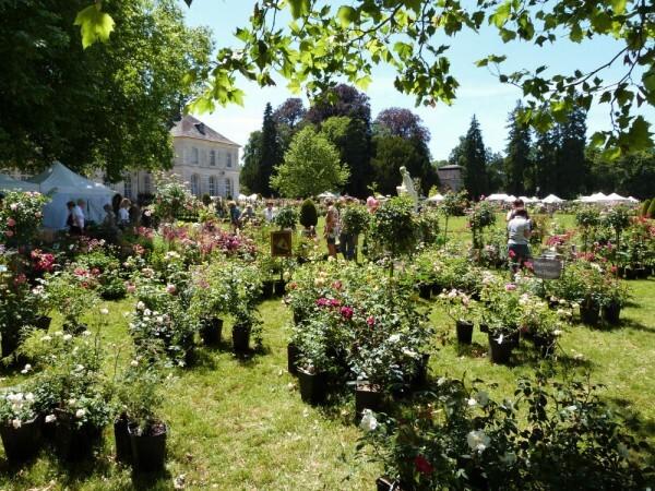 journees-de-la-rose-chaalis---juin-2014---stand-francia-th.jpg