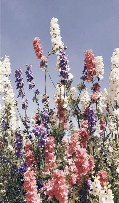 Paradis des fleurs(2)