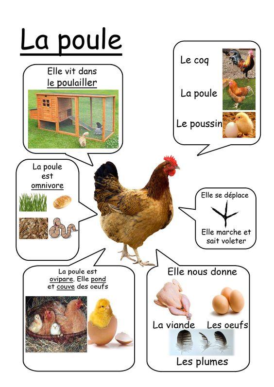 Super La ferme: fiches doc. - La maternelle d'Isadis7 MN98