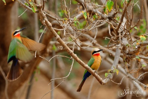 Kruger (Sept 2016): the Birds