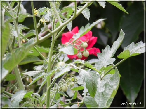 Dans mon jardinet                          4