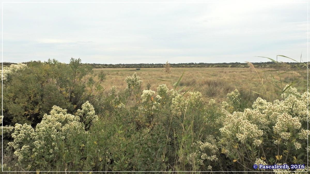 Plaines du Teich et domaine de Fleury - Octobre 2016 - 2/13