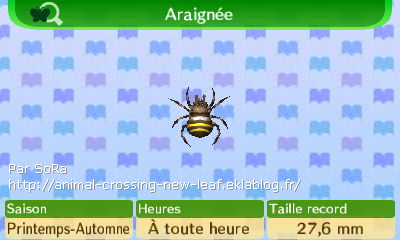 Photos des insectes 1