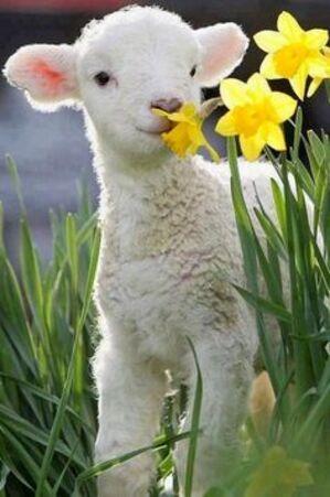 C'est le printemps, vraiment!