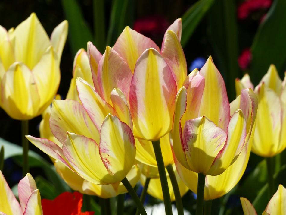 Les fleurs du Jardin des Plantes