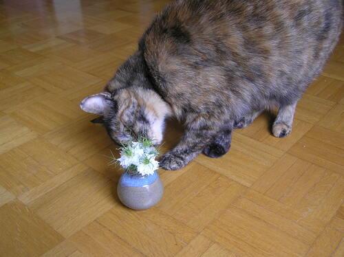 Moustaches et fleurs blanches
