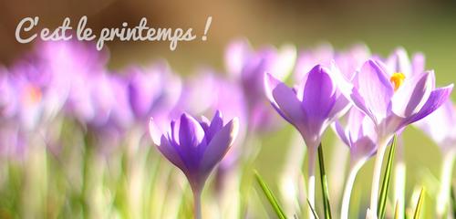 V'la l'printemps !!!