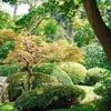deco-jardin-bien-choisir-un-arbre-pour-son-jardin-2509919_1350.jpg