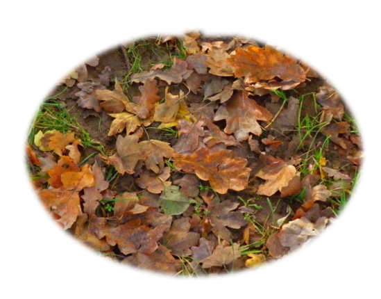Tubes feuilles d' automne