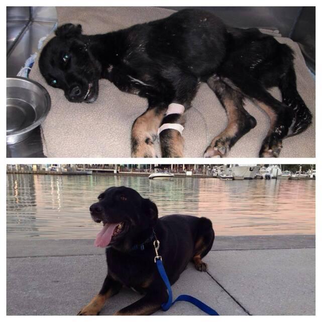 RILEY quand il a été trouvé, et maintenant, il revient de loin, merci à son sauveteur Zak, le 20  juin 2010