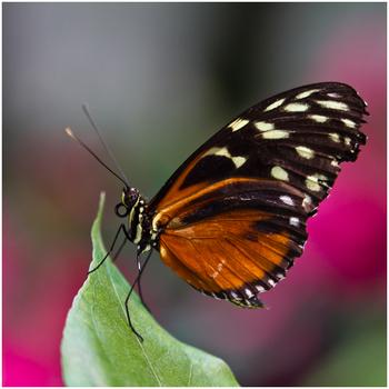 La serre aux papillons (1)