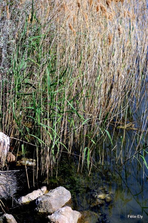 Plantes et reflets (2)