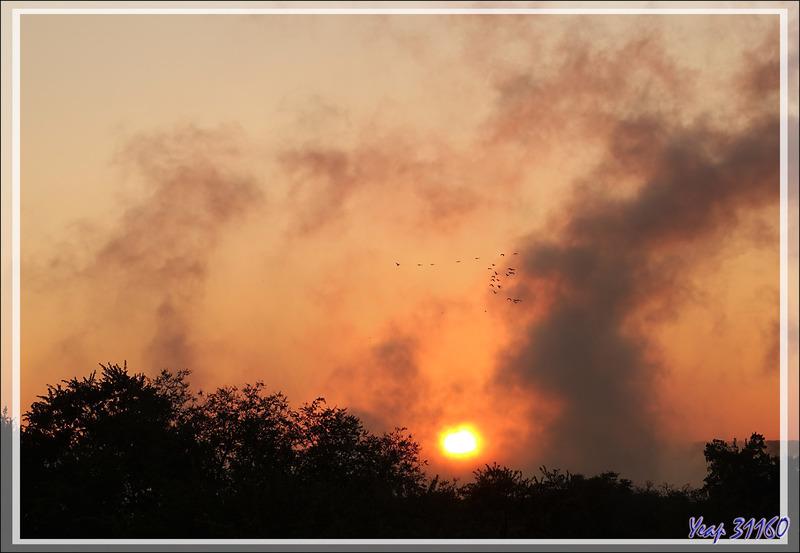 De retour après ce très long périple ! Incendie sur la savane au coucher du soleil - Zimbabwe