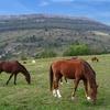 chevaux 5.jpg