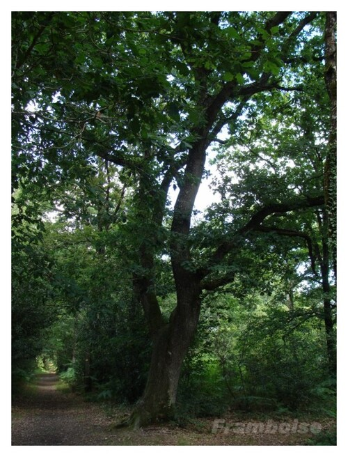 Forêt de Princé
