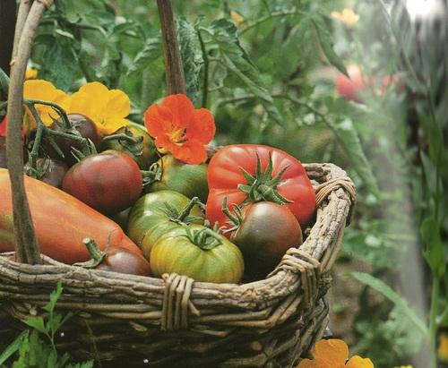 Défi n° 163 : la récolte au jardin