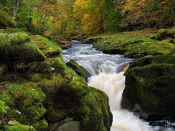 Le ruisseau de tous les dangers ...