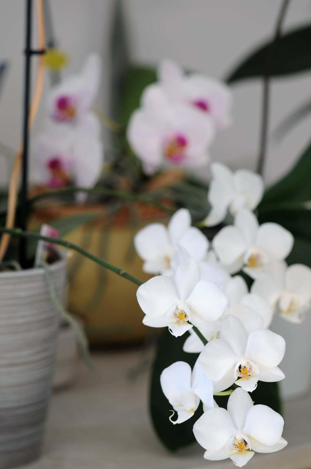 Les plantes à fleurs de la maison(3)...Lé cactus de noël... A  suivre