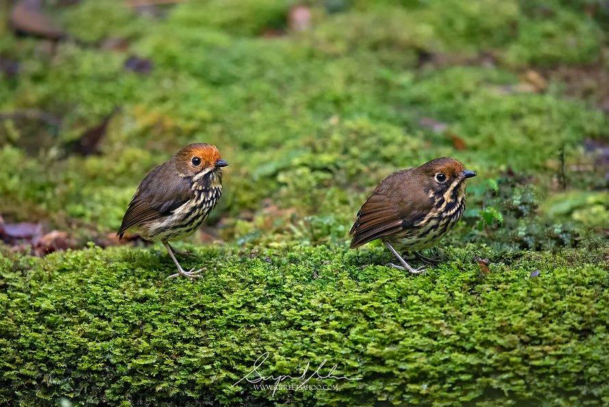 Un photographe a visité le Pérou et voici les 31 plus beaux oiseaux qu'il a trouvés