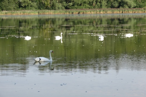 Promenade au bord du lac de Marcenay...