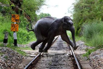 Elephant Dans l'Est de l'inde