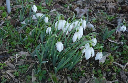 De jolies précoces en ce mois de févier