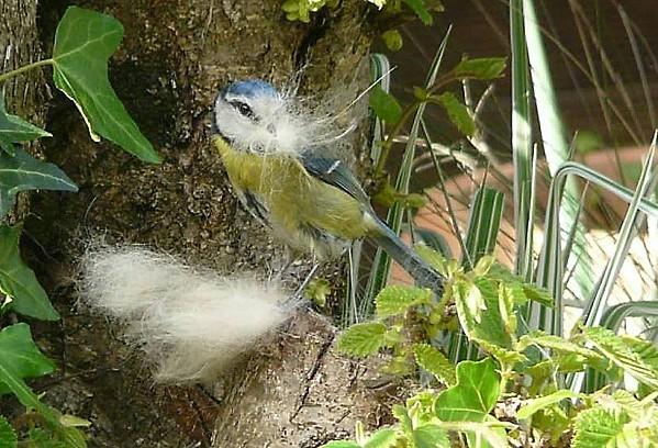 Mes-bleue--07-04-11-052.jpg