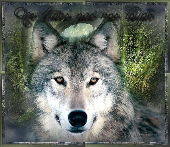 * Protégeons nos amis les loups