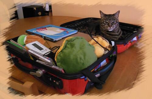 Dans ma valise musicale il y a....