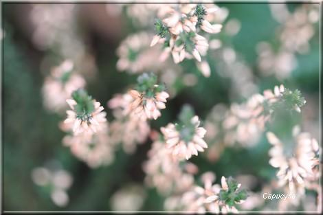 Jardin secret d'hiver_ 2