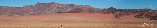 Desert horses in Aus