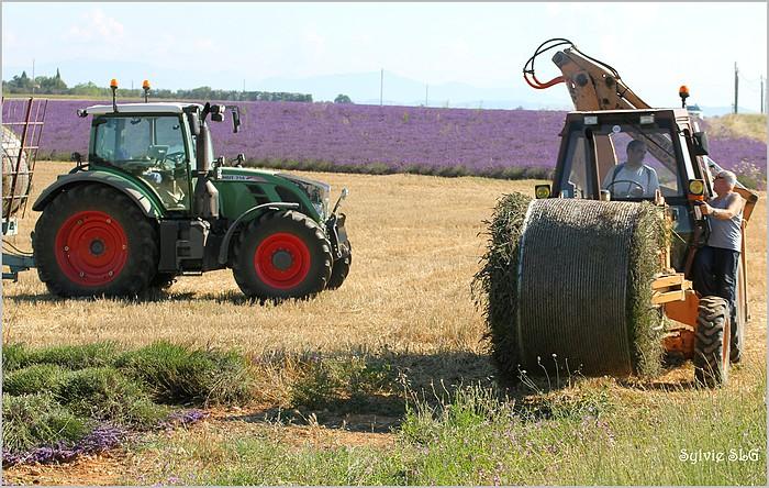 Valensole et ses champs de lavande
