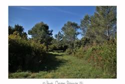 Forêt domaniale Saint Gely du fesc
