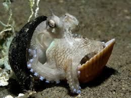 Le sommeil des animaux marins ...