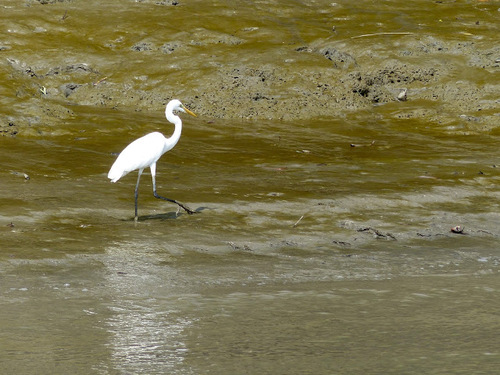 la région des Sundarbans dans le golfe du Bengale
